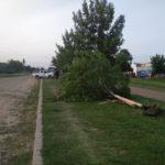 Fuerte impacto entre un auto y una camioneta que terminó derribando un árbol