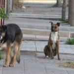 Se podrían aplicar multas a aquellos que no cuiden a sus mascotas