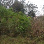 Recuperaron animales que había sido robados de un campo en Parera