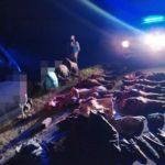 Tras persecución detienen a 4 personas con carne vacuna faenada en Ruta 14