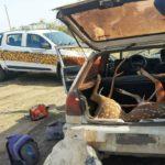 Tres personas de Urdinarrain identificadas: Se les secuestró armas y un ciervo que llevaban en el baúl